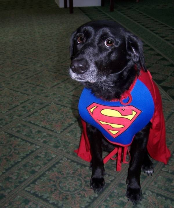 The Importance of Therapy Dogs at Senior Care Communities