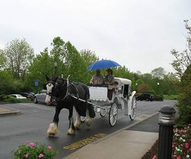 2013_Horse_and_Buggy_Rides-Ted_Pfeuffer_008-resized-600