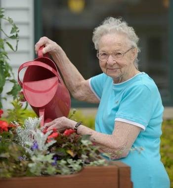 Easy Summer Gardening Tips for Seniors