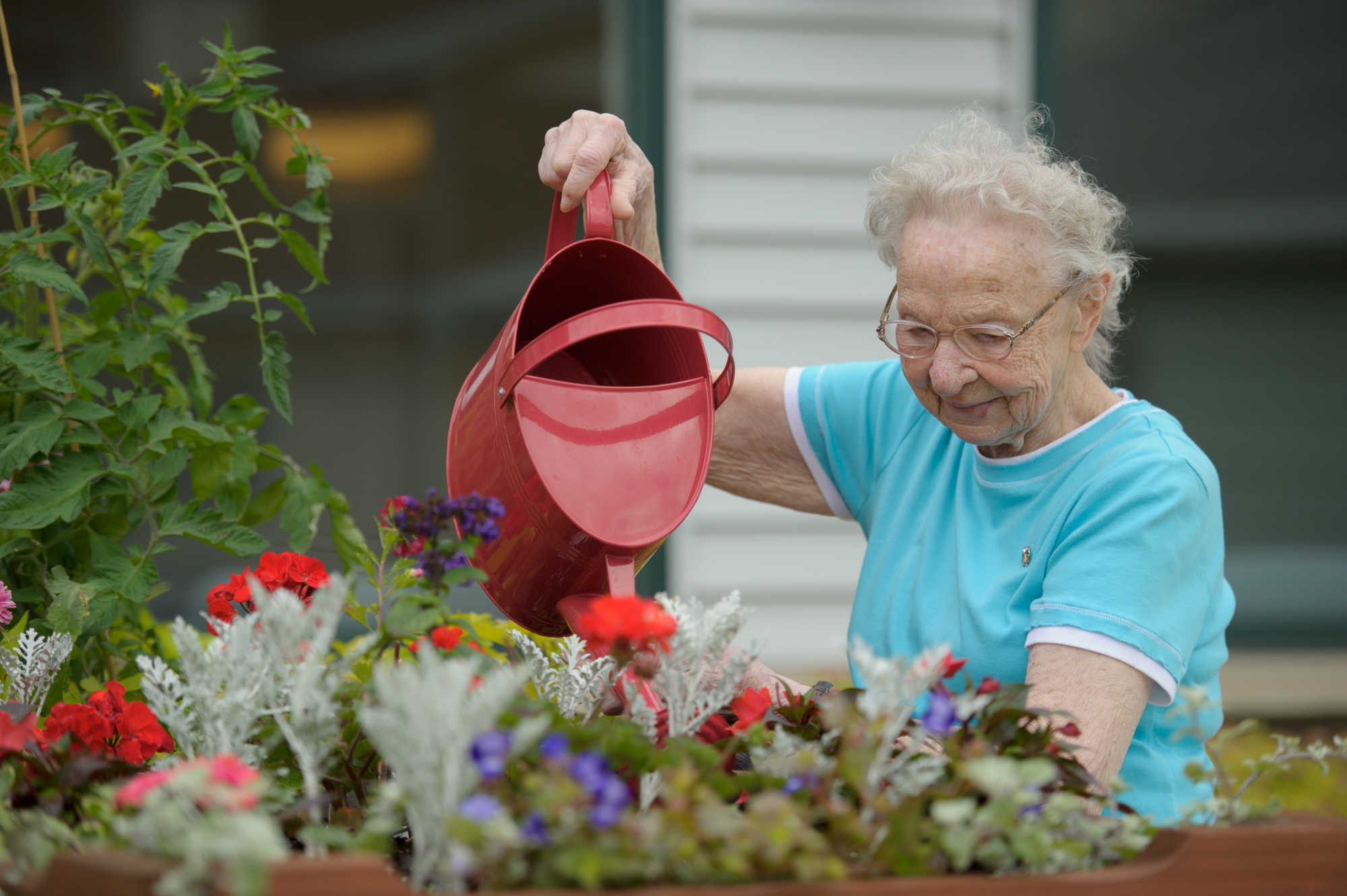 3 easy gardening projects for aging loved ones
