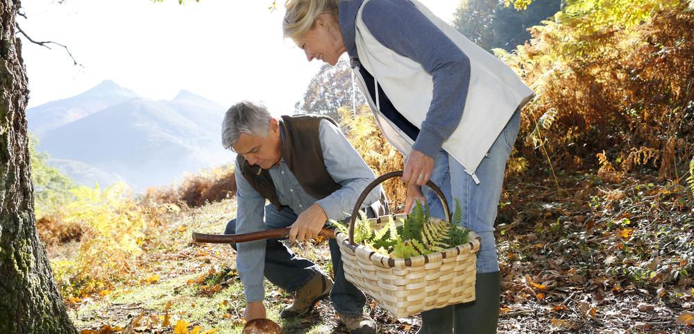 Fun Fall Activities for Seniors to Enjoy in Central CT